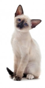 tilbud-katteforsikring