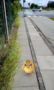 Se dig for, når du spiller Pokemon Go ude i trafikken.